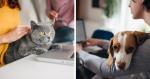 5 benefícios radiantes de fazer home office com o seu pet por perto
