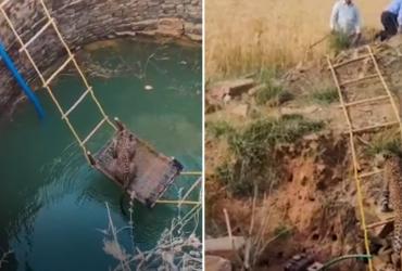 Veja vídeo inusitado de como aldeões conseguiram resgatar esse leopardo sem se ferirem