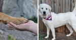 Cão se transforma em herói após salvar cuidadora de um sequestro durante uma caminhada