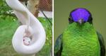 15 vezes que a natureza mostrou ter uma paleta de cores INACREDITÁVEIS