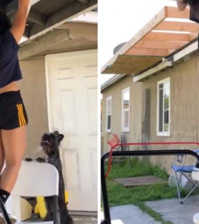 """VÍDEO: Cãozinho vê dona se exercitar e busca forma inusitada para """"salvá-la"""""""