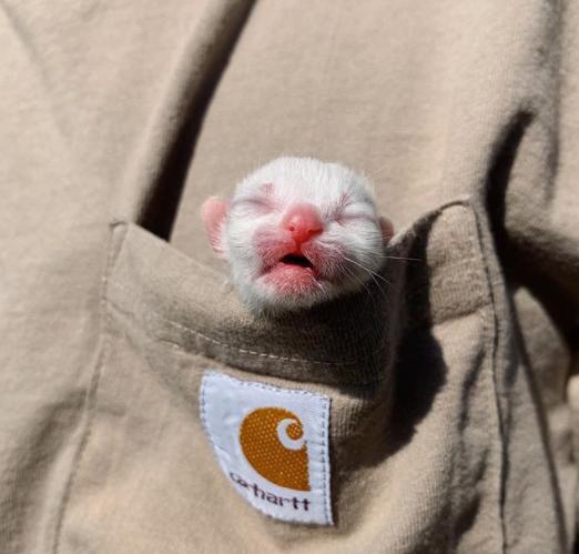 casal-adota-gato-recem-nascido