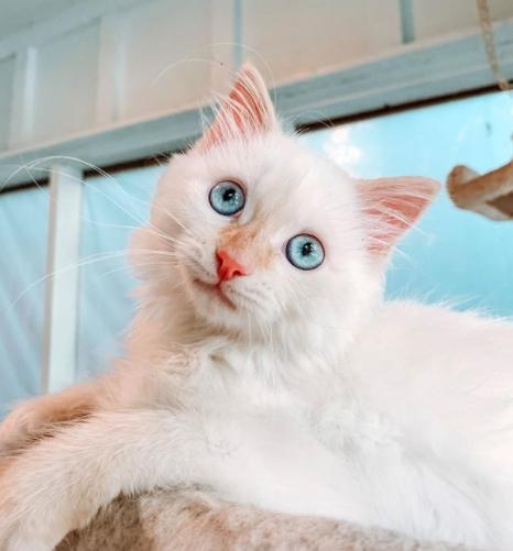 gato-recem-nascido
