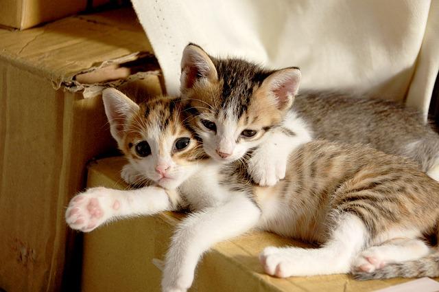 motivos-dois-gatos-em-casa