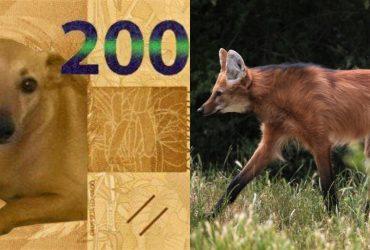 Nota de R$ 200: por que tanta repercussão e qual o real motivo da sua criação?