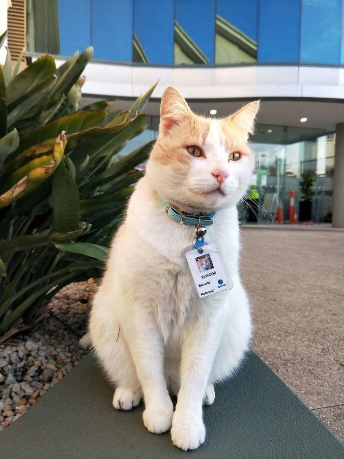 hospital-contrata-gato-como-segurança