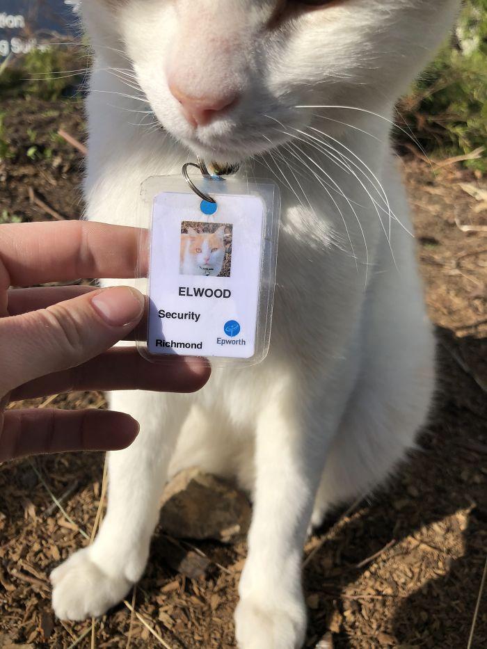hospital-contrata-gato