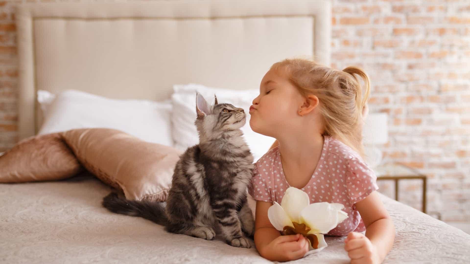 razões-em-ter-gatos-em-casa