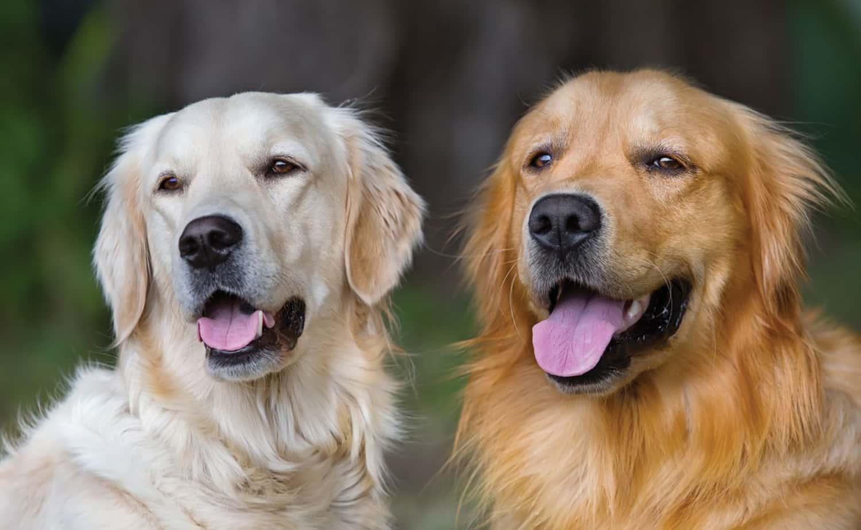 vantagem-dois-cães-em-casa