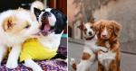 8 motivos (básicos) que comprovam: ter dois cães é melhor que um!