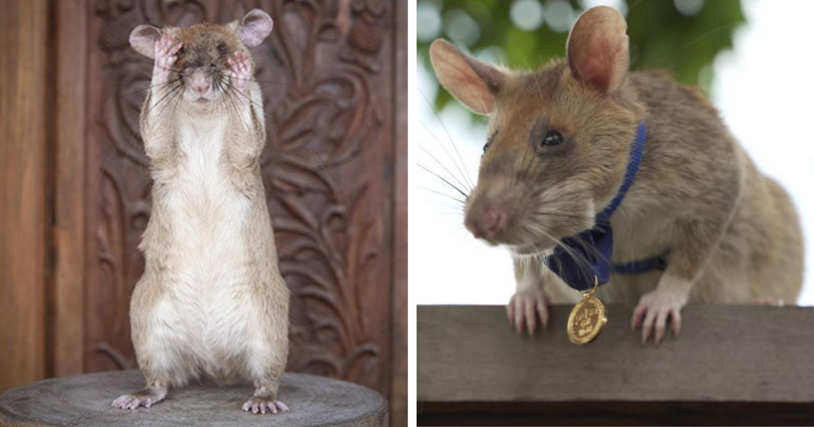 Ratinho recebe medalha de OURO por bravura ao salvar vidas detectando...