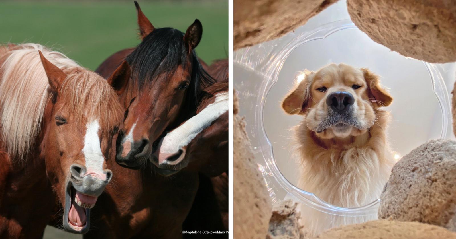 Concurso de fotografia animal anuncia as 40 fotos mais HILÁRIAS como finalistas
