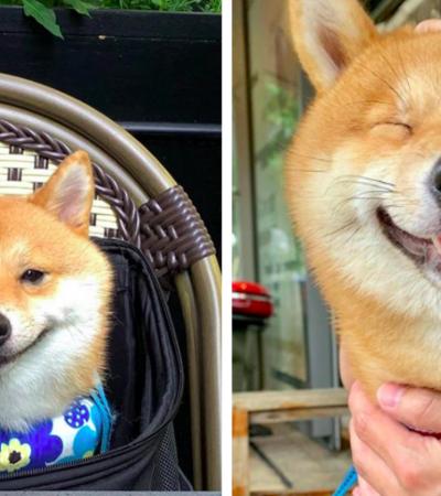Esse doguinho se tornou um verdadeiro viral ao aparecer sempre sorrindo nas fotos
