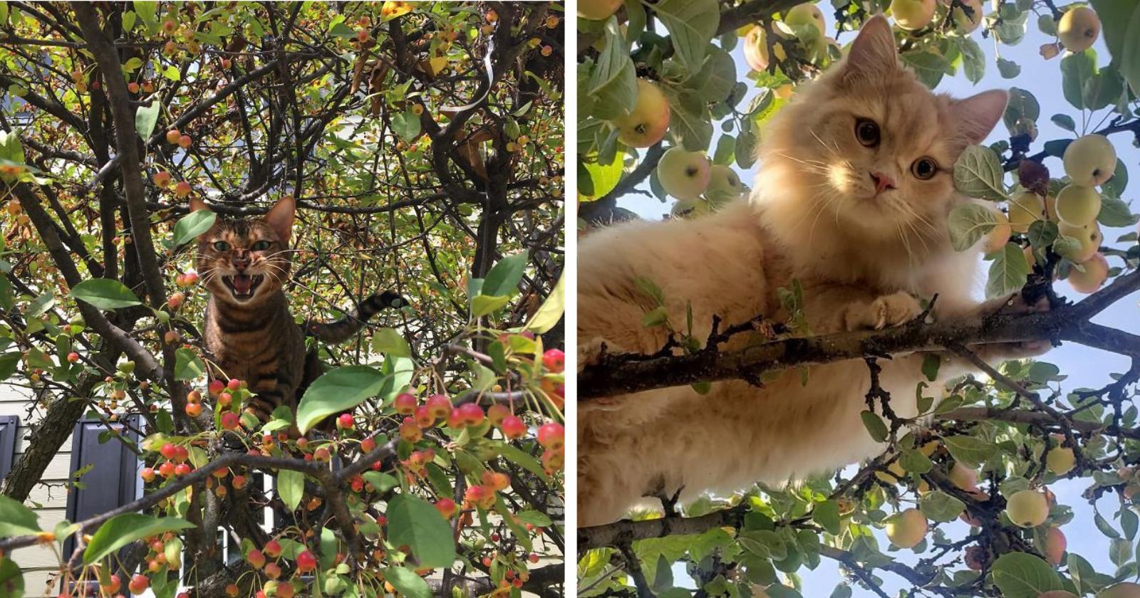 30 vezes em que gatos foram flagrados se sentindo os verdadeiros pássaros