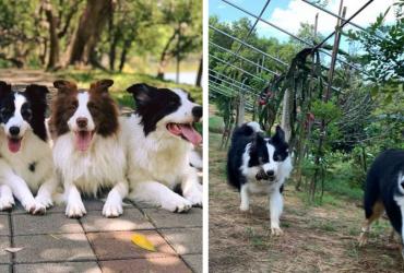 Ao ver dono colher frutas, cães tentaram ajudar do jeito mais engraçado possível!