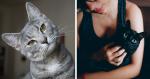 Os gatos REALMENTE se apegam aos donos? Pesquisa afirma que...
