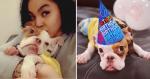 Cãozinho que foi rejeitado por causa de deficiência ganha o melhor presente da vida!