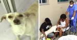 Cão invade hospital procurando sua dona e cena de reencontro emociona