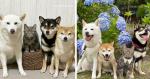 Família com três cães decide adotar gato e comportamento do felino chama atenção