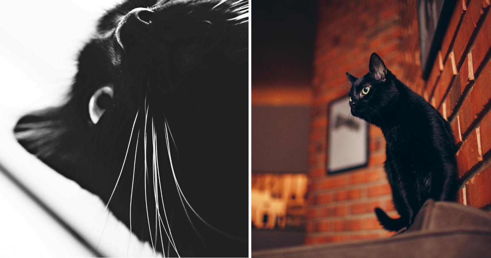 Conheça a VERDADEIRA história por trás da superstição do gato preto