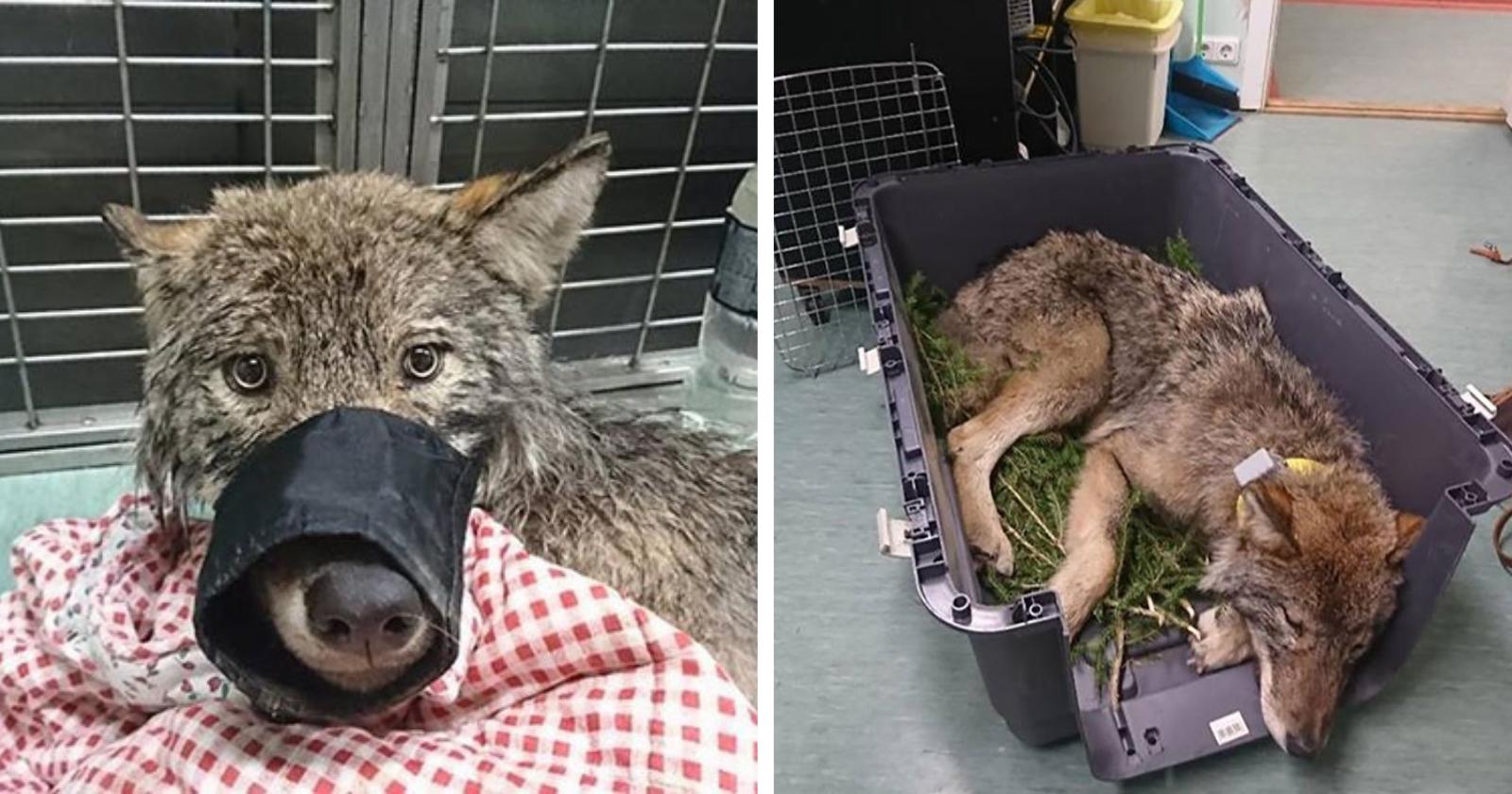 Trabalhadores resgatam cão de lago congelado e veterinário revela algo SINISTRO