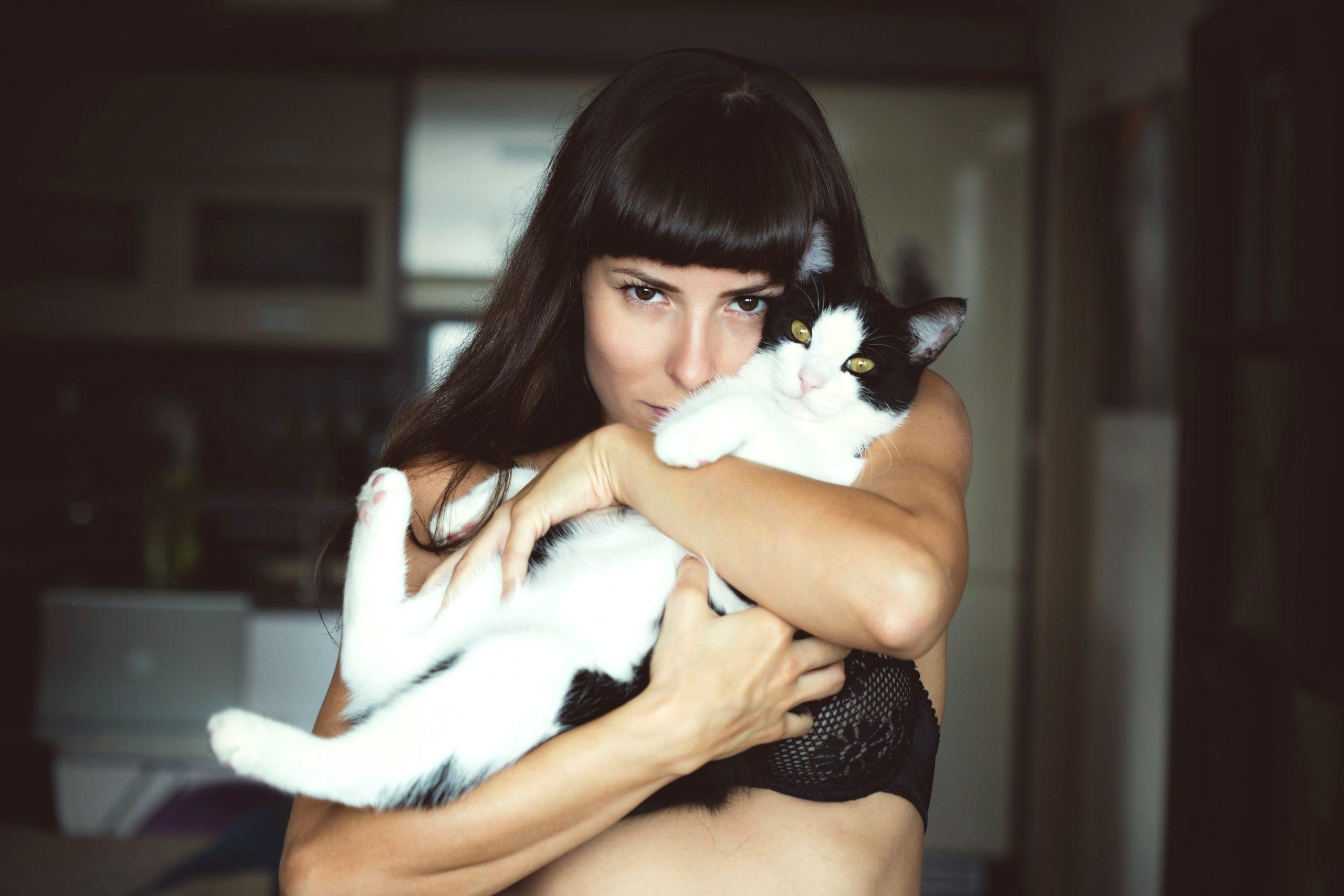 afeto-gatos