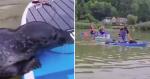 Ao ver família em pranchas, essa foca decidiu fazer a coisa mais inusitada já registrada!