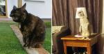 Internautas decidem compartilhar fotos 'desfavoráveis' de seus gatos e reúnem as mais engraçadas já vistas!