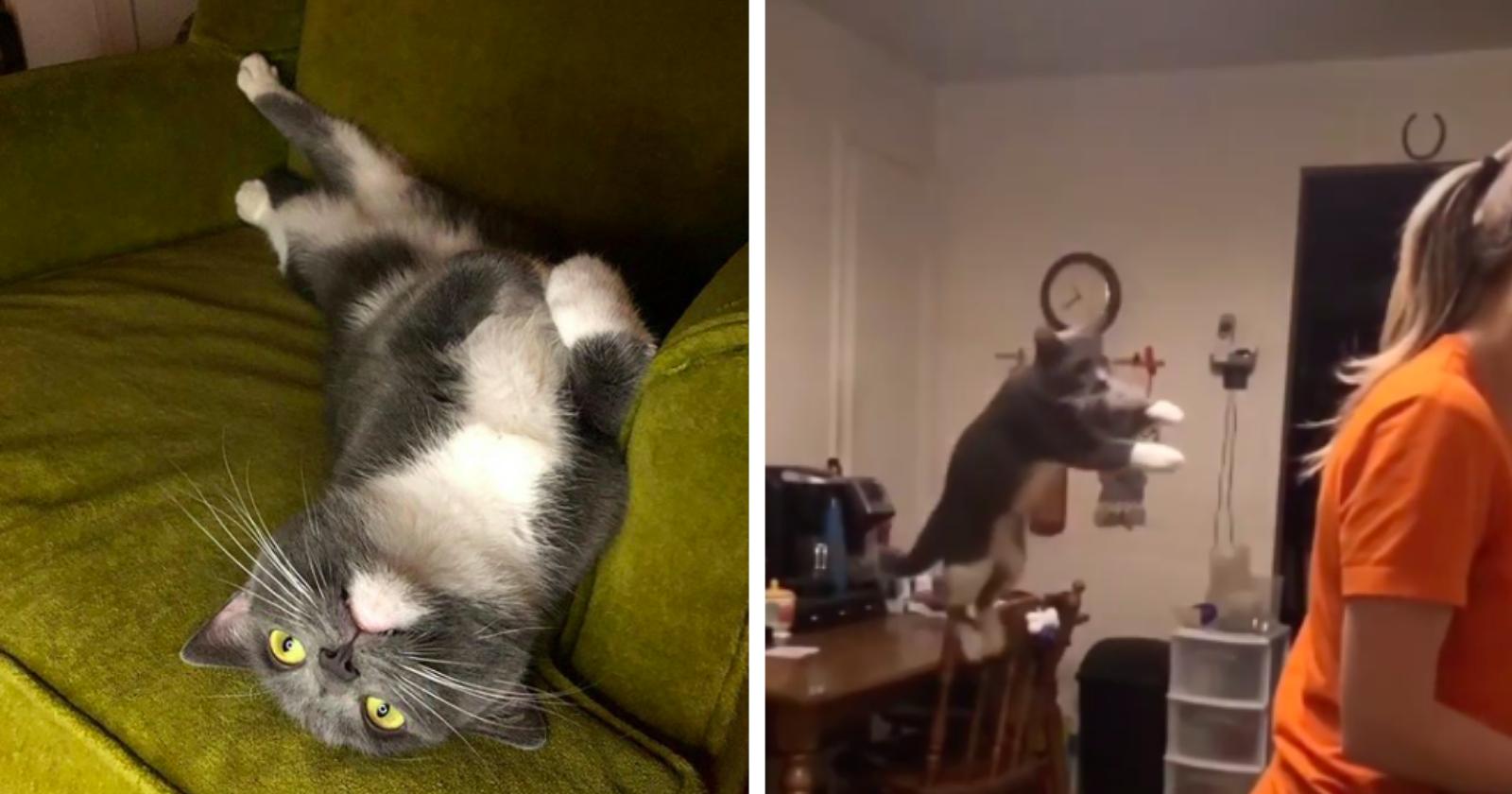 Depois de ser adotada, gatinha perde a timidez e mostra que sabe VOAR