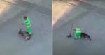 Gari é flagrado 'varrendo doguinho' e vídeo se torna a coisa mais fofa da web