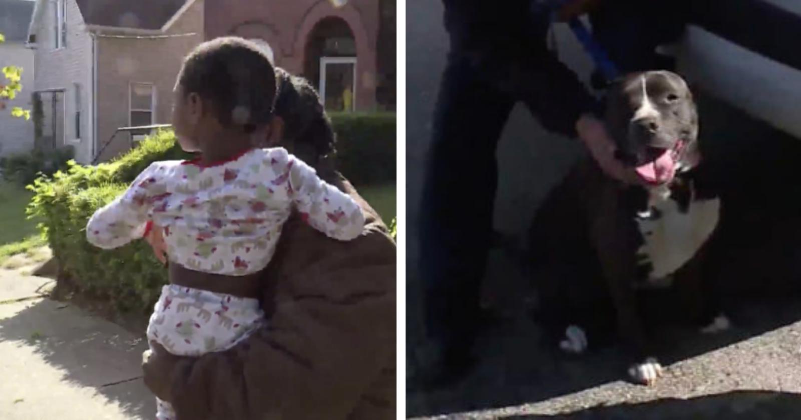 Pit bull de rua protege criança que se perdeu do pai até ajuda chegar: 'Agiu como cão de guarda dele'