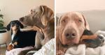 Cãozinho supera ansiedade causada por trauma após ganhar um novo amigo