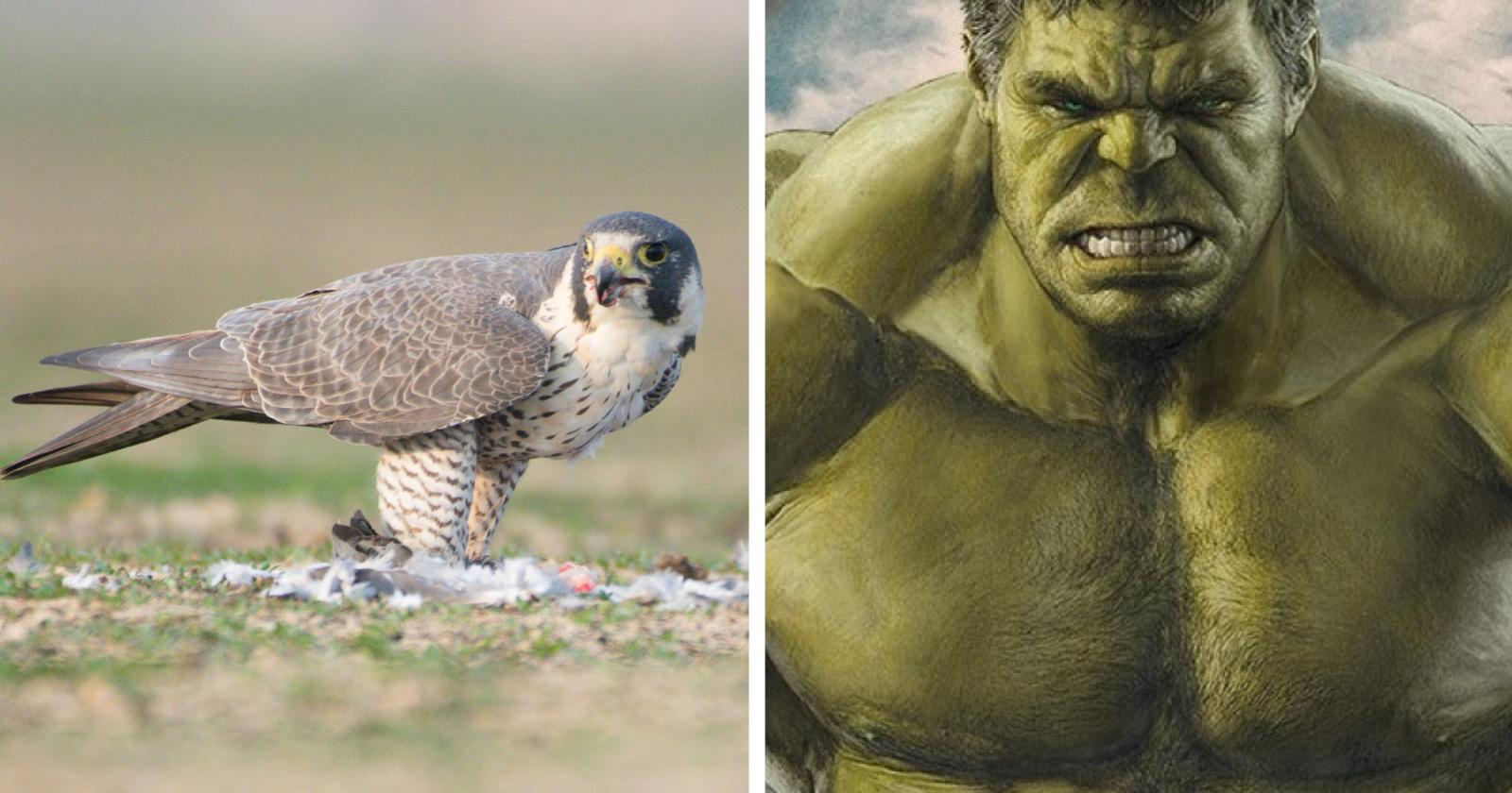 Fotógrafo impressiona com foto de falcão parecendo com o 'Hulk'