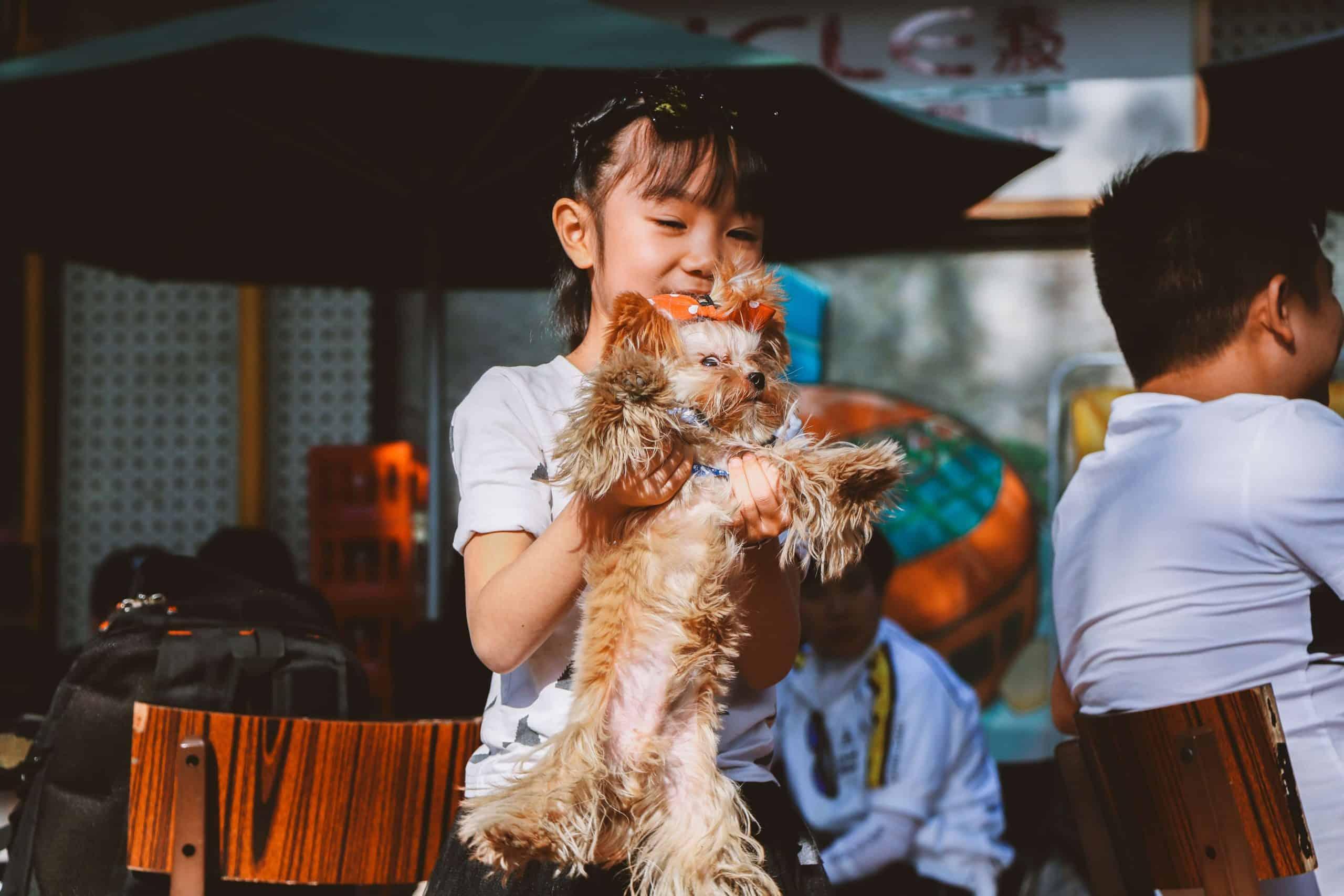 adoção-cachorro-quarentena