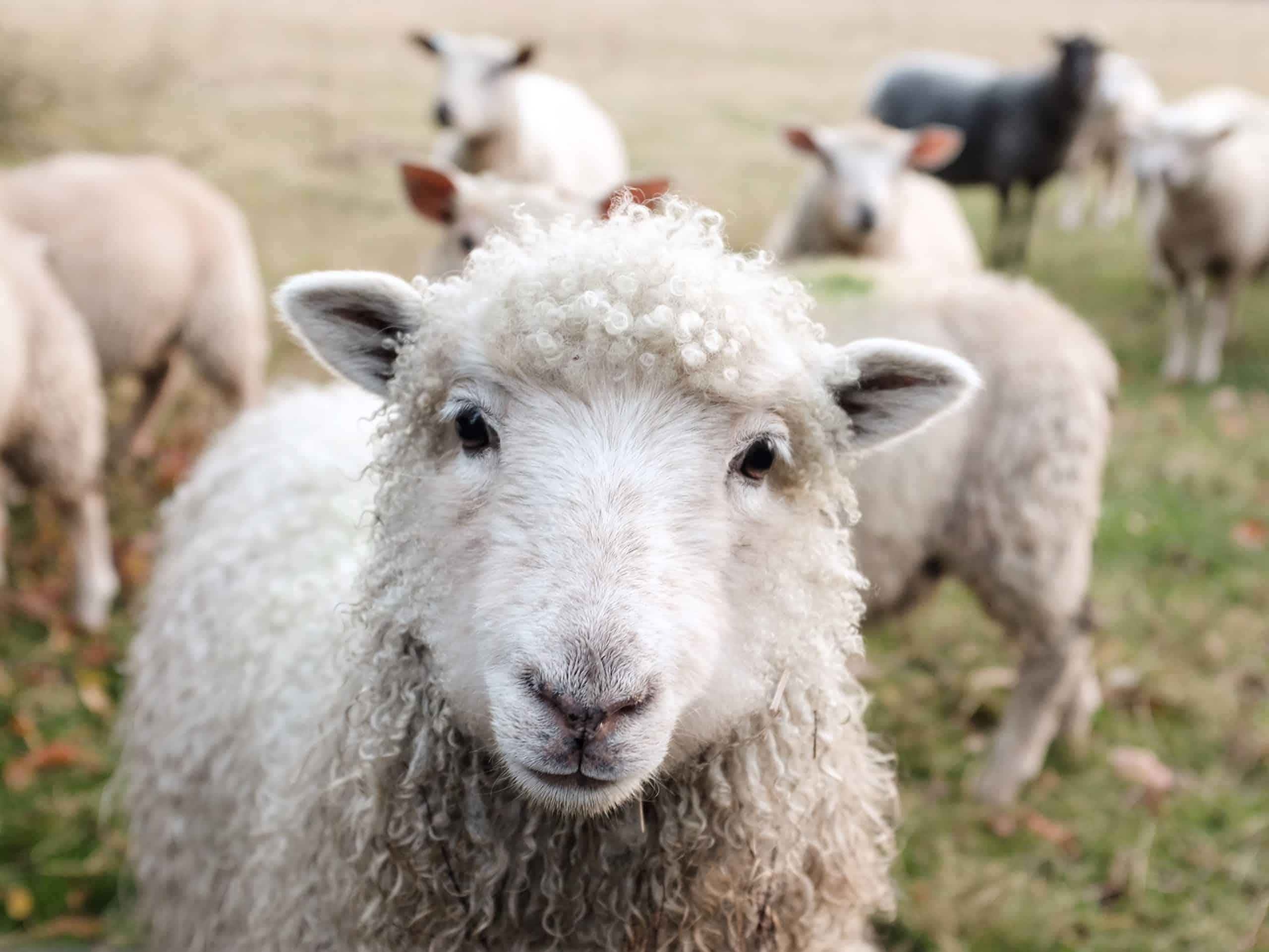 benefícios-animais-saúde
