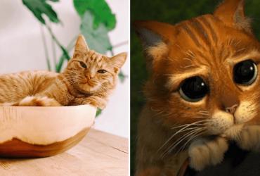 Gatinho compra donos fazendo a cara do Gato de Botas e sua reação manipula a WEB
