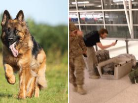 foto-soldado-tira-soneca-em-aeroporto-e-pastor-alemao-o-protege-enquanto-isso