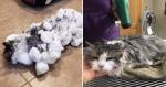 Dono encontra gato COMPLETAMENTE congelado e veterinários lhe dão a sinistra notícia