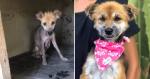 Antes e depois de cadelinha resgatada das ruas trás emoção para família que a resgatou