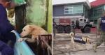 Lembra do cachorrinho que foi resgatado por trabalhadores em enchente no México? Ele foi promovido e ganhou mais que um lar!