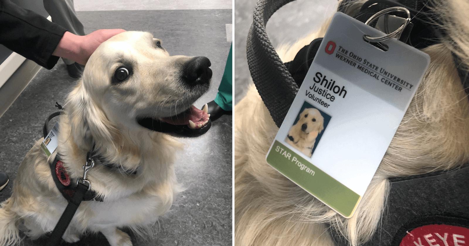 Hospital chama atenção por contratar um cachorro para função completamente fora do comum