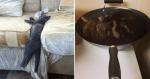 10 gatos que escolheram os lugares mais inusitados para tirar um cochilo