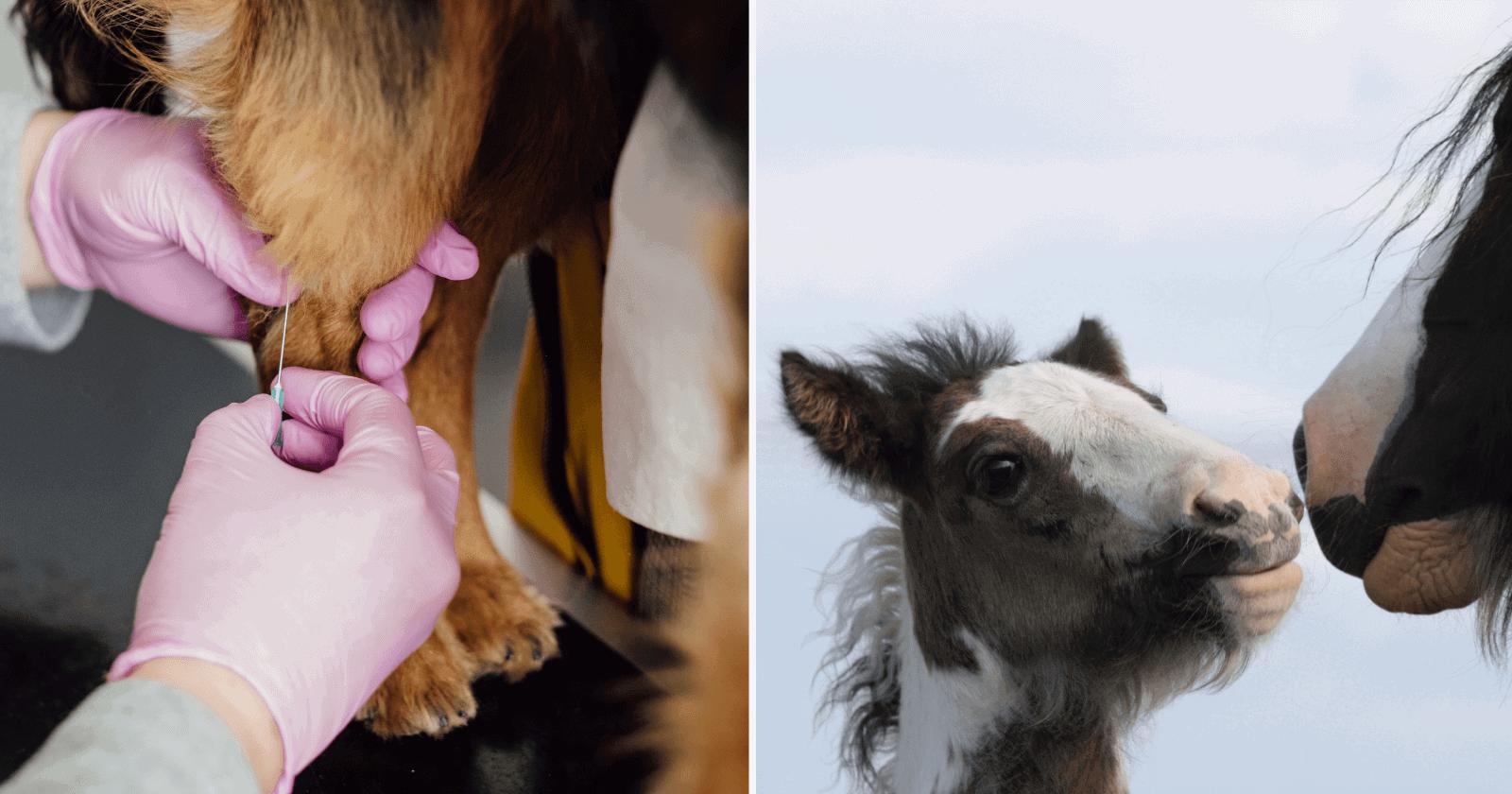 Veterinário compartilha foto fofinha de potro bebê tirando cochilo em local inusitado
