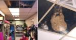 Dono de loja instala teto de vidro para gatos e rotina perturba (e encanta) clientes