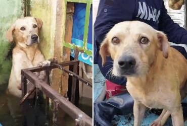 Trabalhadores resgatam cãozinho de enchente e sua reação comove com amor
