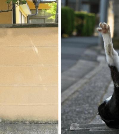 Ele decidiu fotografar APENAS gatos de ruas. Você ficará de boca aberta com as fotografias!