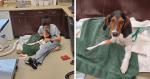 Dono decreta fim HORRENDO para cãozinho machucado, mas veterinários determinam o contrário!