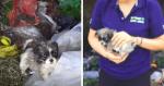 Reação de cachorrinho sendo resgatado de lixo é a coisa mais linda que você verá hoje!