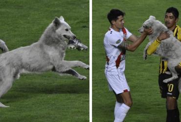 Cãozinho que invadiu campo e parou jogo de futebol recebe a melhor surpresa de sua vida!
