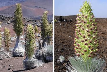 Flor da Paciência: essa é a planta que demora 7 ANOS para sua flor aparecer e dura apenas...